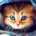 Милые Котята hd Живые Обои