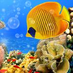 Аквариум Живые Обои 🐟 Картинки Рыбы