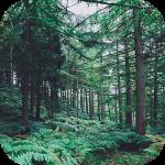 Лес Обои HD (фон, темы, картинки)