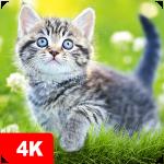 Обои с кошками | Кошки и котята от 7Fon