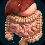 Внутренние органы в 3D (анатомия)