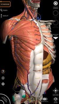 Анатомия - 3D Атлас скриншот 1