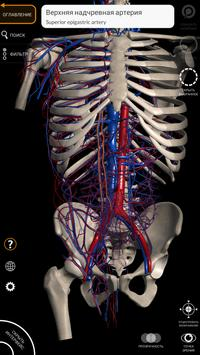 Анатомия - 3D Атлас скриншот 2