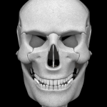 Osseous System 3D (анатомия)