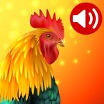Животные: Рингтоны и Мелодии