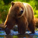 Bear Simulator - Animal Simulator