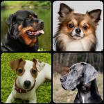 Породы собак – Фото-тест про всех собак мира
